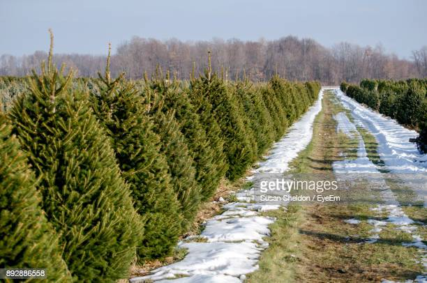road amidst plants on field against sky - christmas tree farm stock pictures, royalty-free photos & images