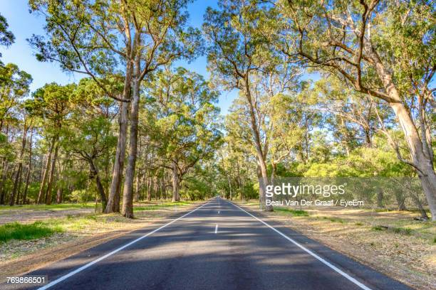 road amidst trees against clear sky - western australia stock photos and pictures