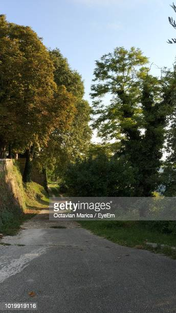 road amidst trees against sky in city - marica octavian stock photos and pictures