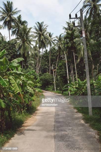 road amidst trees against sky - bortes imagens e fotografias de stock