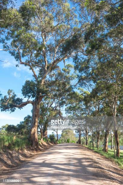 road amidst trees against sky - country road stock pictures, royalty-free photos & images