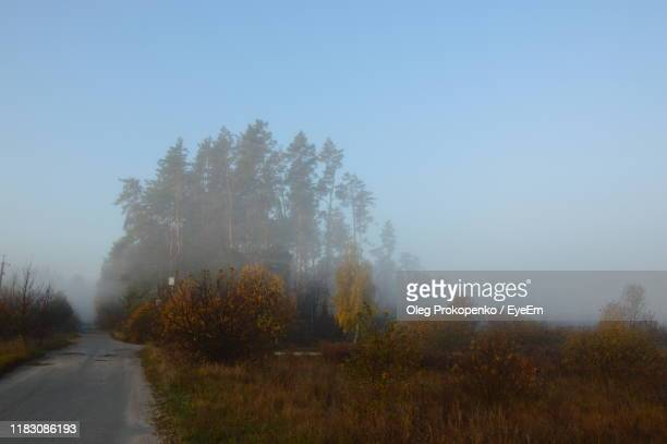 road amidst trees against sky - oleg prokopenko stock pictures, royalty-free photos & images