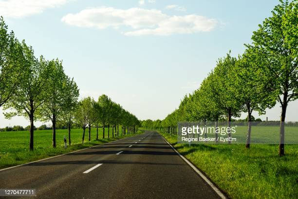 road amidst trees against sky - avenue stock pictures, royalty-free photos & images