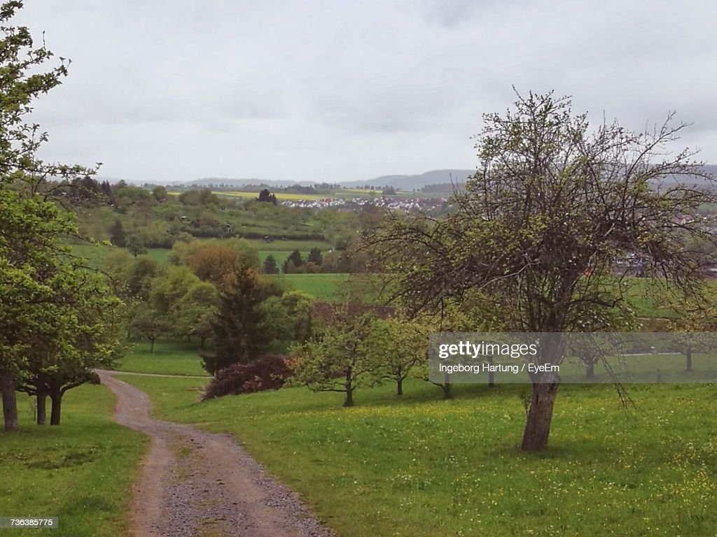 Road Amidst Trees Against Sky : Stock Photo