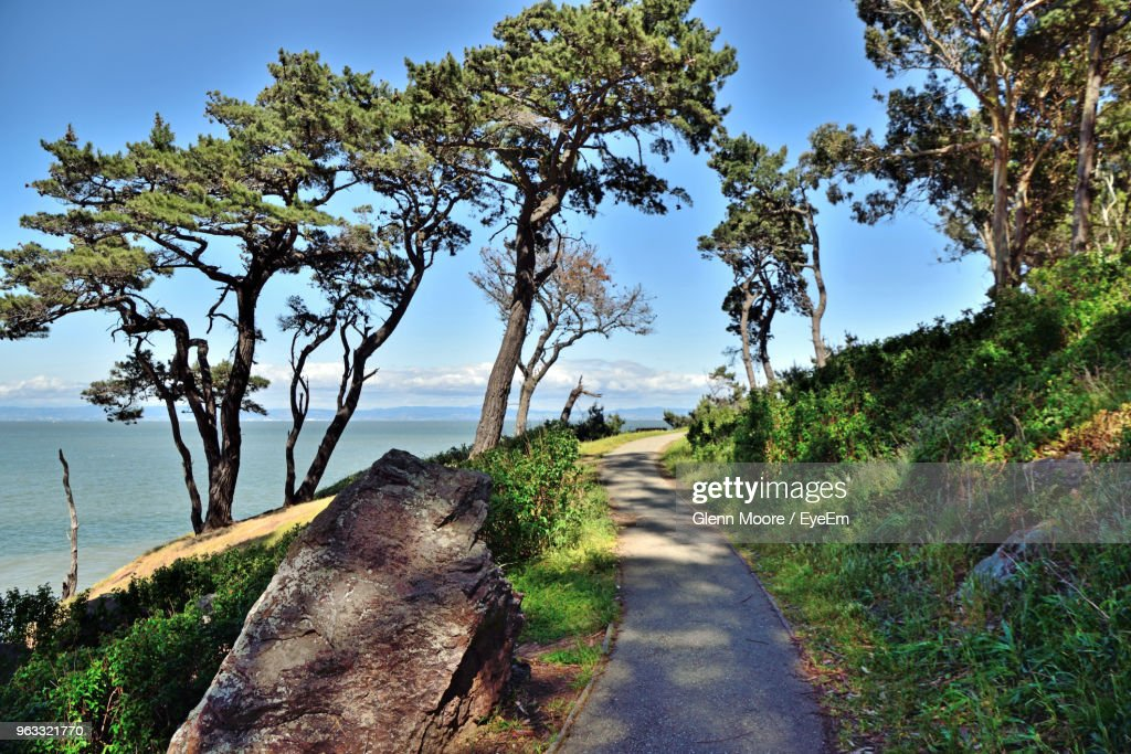 Road Amidst Trees And Sea Against Sky : Stock Photo