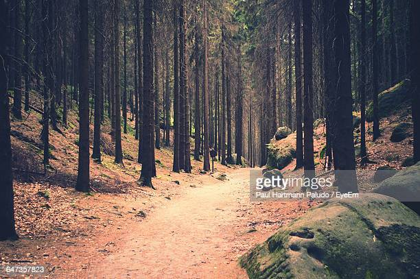 Road Amidst Trees At Forest