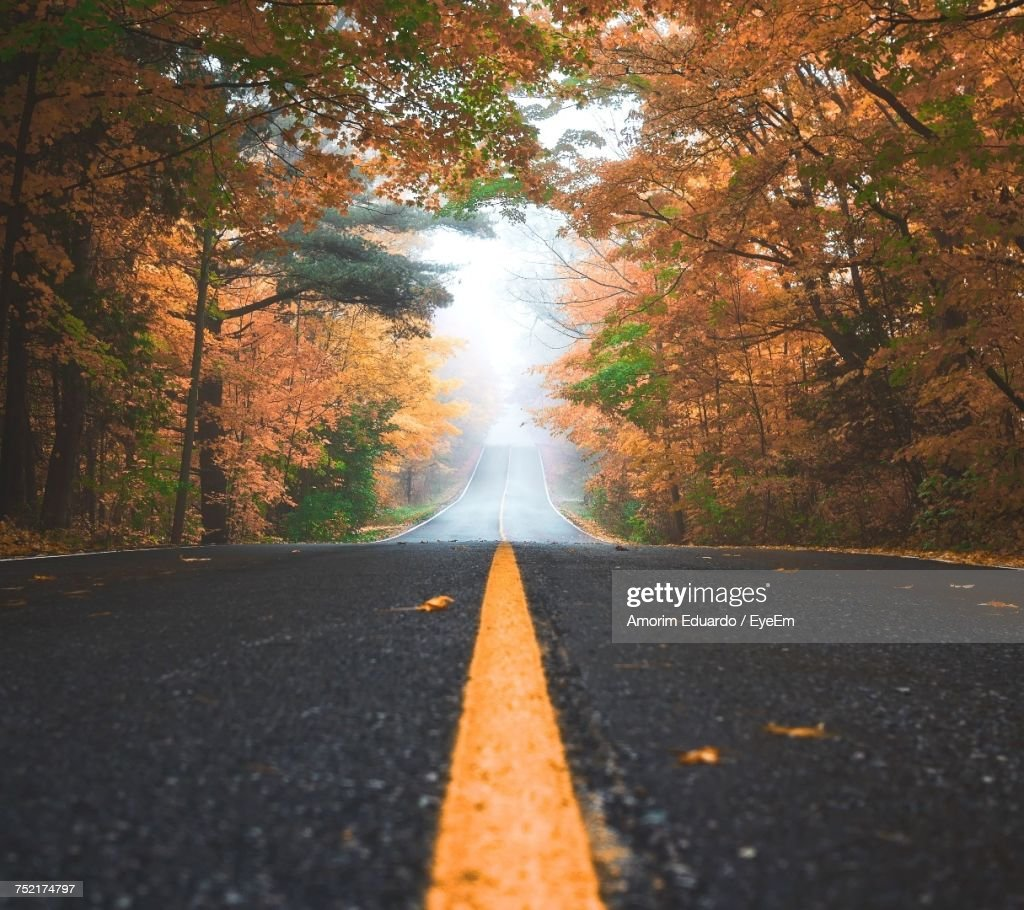 Road Amidst Trees During Autumn : Stock Photo