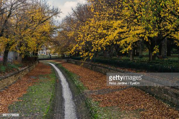 road amidst trees during autumn - bendigo stock pictures, royalty-free photos & images