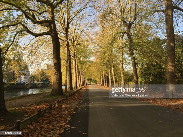 road amidst trees in city during autumn - lille france stock pictures, royalty-free photos & images