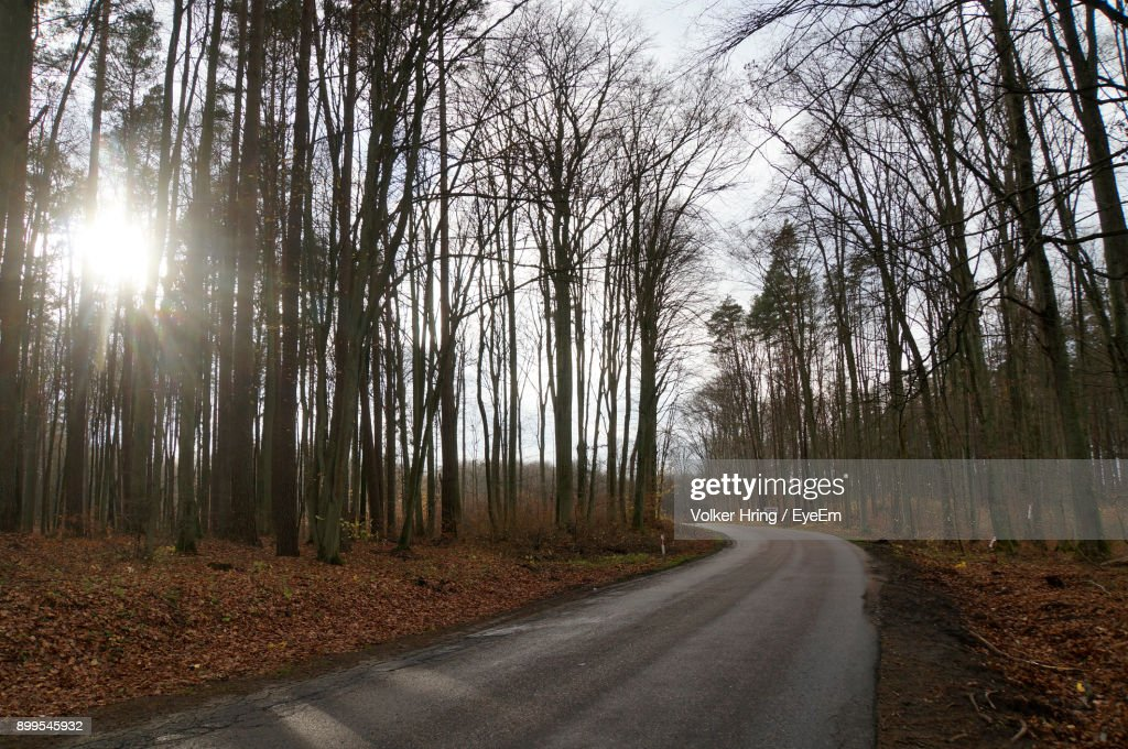 Road Amidst Trees In Forest Against Sky : Stock Photo