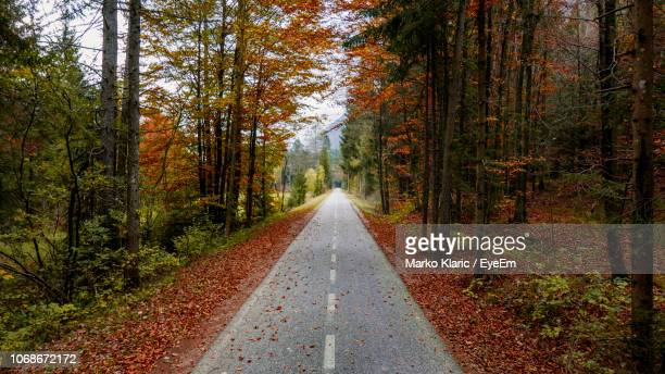 road amidst trees in forest during autumn - straight stock pictures, royalty-free photos & images