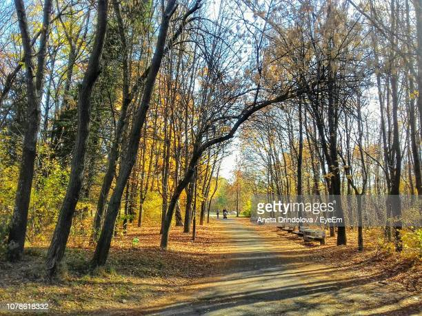 road amidst trees in forest during autumn - aneta eyeem stock pictures, royalty-free photos & images