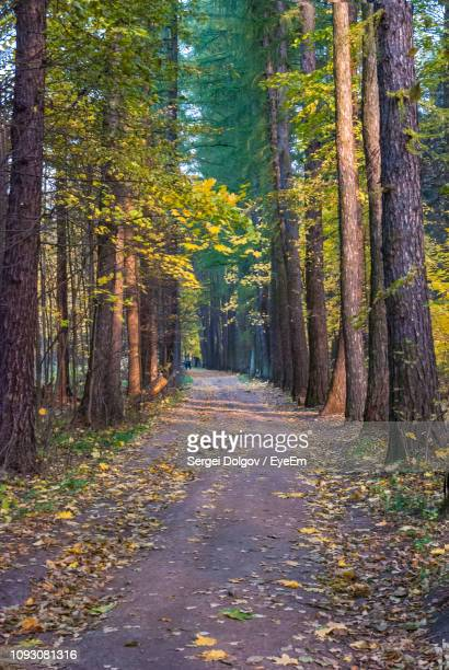 road amidst trees in forest during autumn - sergei stock pictures, royalty-free photos & images