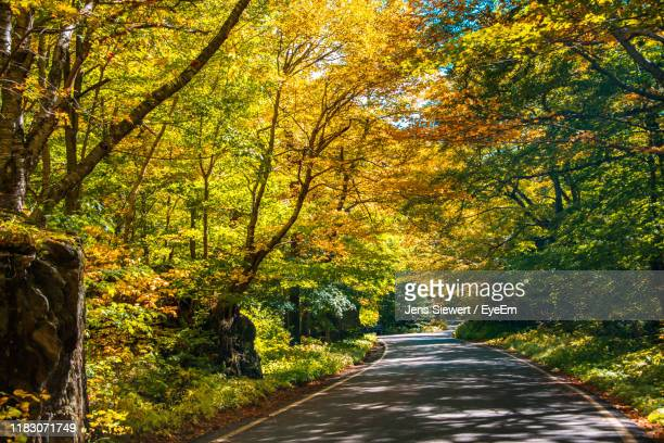 road amidst trees in forest during autumn - jens siewert stock-fotos und bilder
