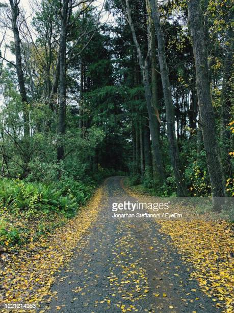 road amidst trees in forest during autumn - victoria australia stock pictures, royalty-free photos & images
