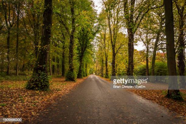 road amidst trees in forest during autumn - dundee scotland stock pictures, royalty-free photos & images