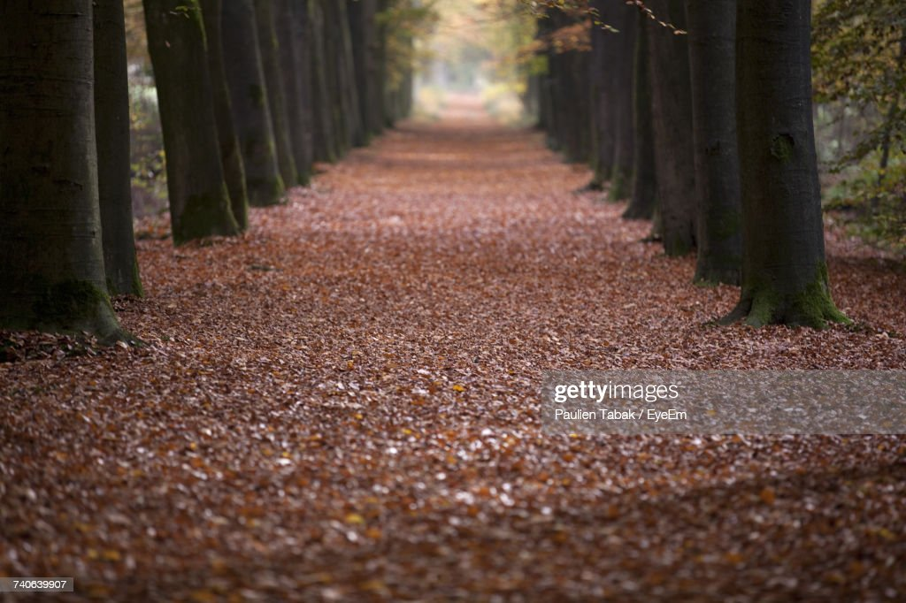 Road Amidst Trees In Forest During Autumn : Stockfoto