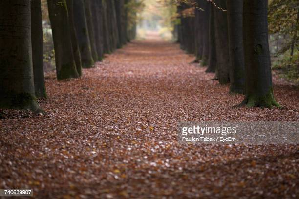 road amidst trees in forest during autumn - paulien tabak stock pictures, royalty-free photos & images