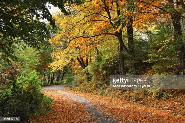 road amidst trees in forest during autumn - new haven connecticut stock pictures, royalty-free photos & images