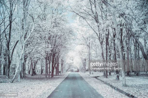road amidst trees in forest during winter - 並木 ストックフォトと画像