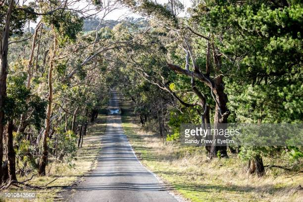 road amidst trees in forest - country road stock pictures, royalty-free photos & images