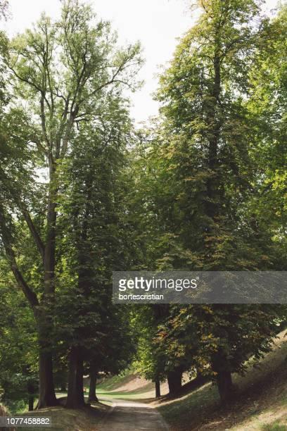 road amidst trees in forest - bortes stockfoto's en -beelden
