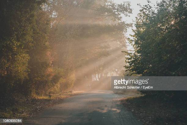 road amidst trees in forest - albrecht schlotter stock photos and pictures