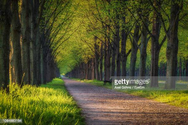road amidst trees in forest - hanover germany stock pictures, royalty-free photos & images