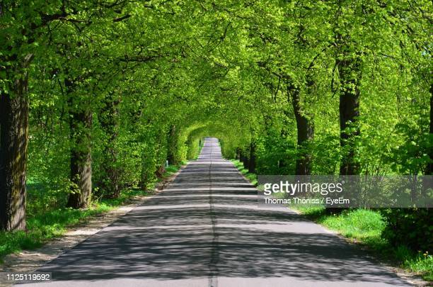 Road Amidst Trees In Forest