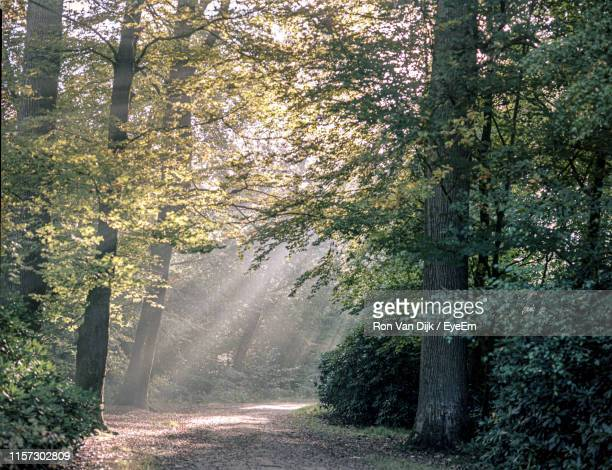road amidst trees in forest - van dijk stock pictures, royalty-free photos & images