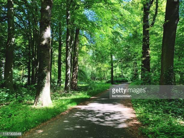 road amidst trees in forest - bortes - fotografias e filmes do acervo