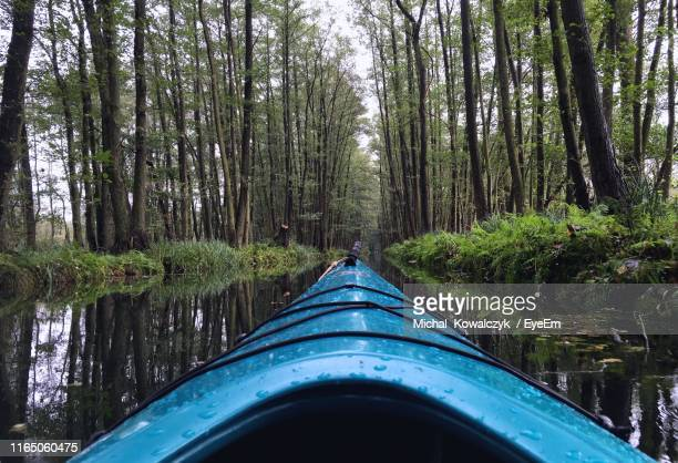 road amidst trees in forest - spreewald stock pictures, royalty-free photos & images