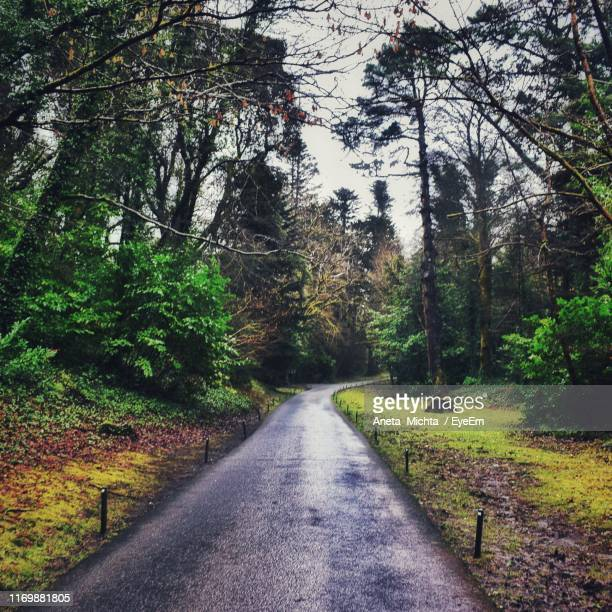 road amidst trees in forest - aneta eyeem stock pictures, royalty-free photos & images