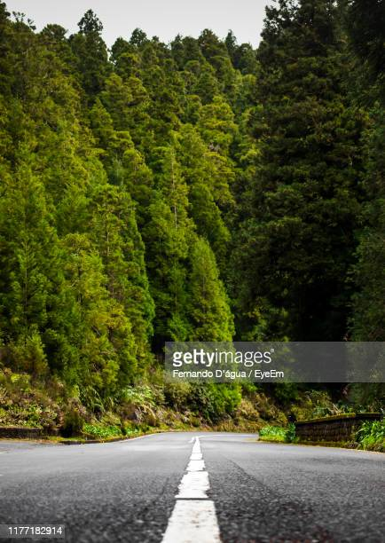 road amidst trees in forest - água stock pictures, royalty-free photos & images