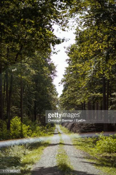 road amidst trees in forest - great plains stock pictures, royalty-free photos & images