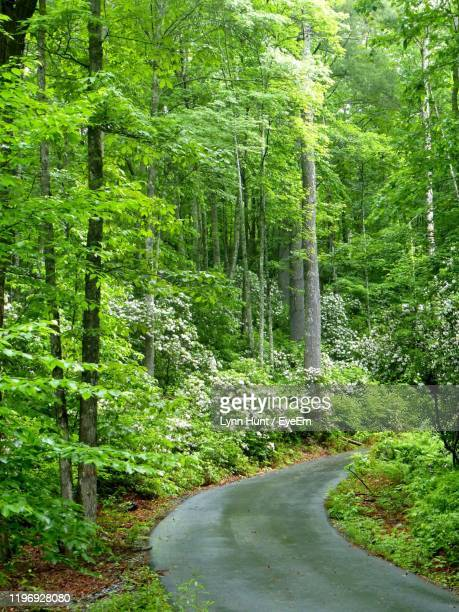 road amidst trees in forest - mountain laurel stock pictures, royalty-free photos & images