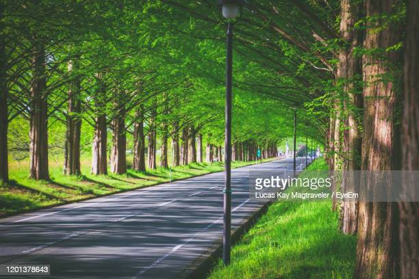 road amidst trees in forest - 並木 ストックフォトと画像