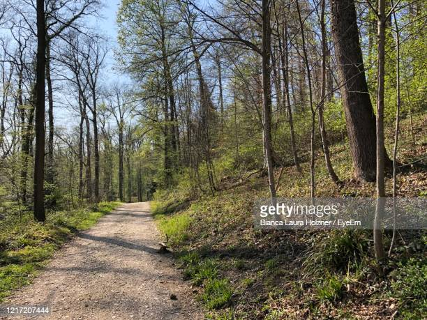 road amidst trees in forest - laura woods stock pictures, royalty-free photos & images