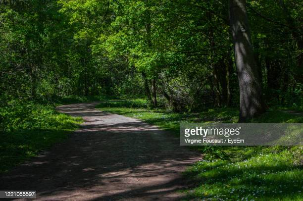 road amidst trees in forest - oise stock pictures, royalty-free photos & images