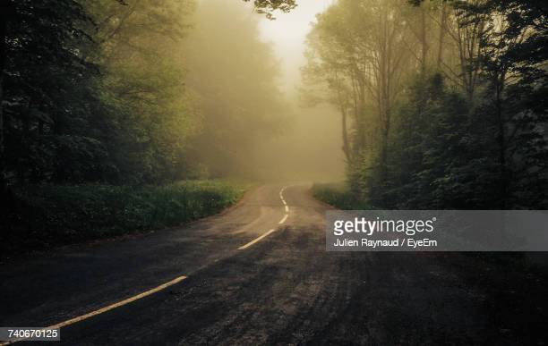 road amidst trees in forest - midi pyrénées stock photos and pictures