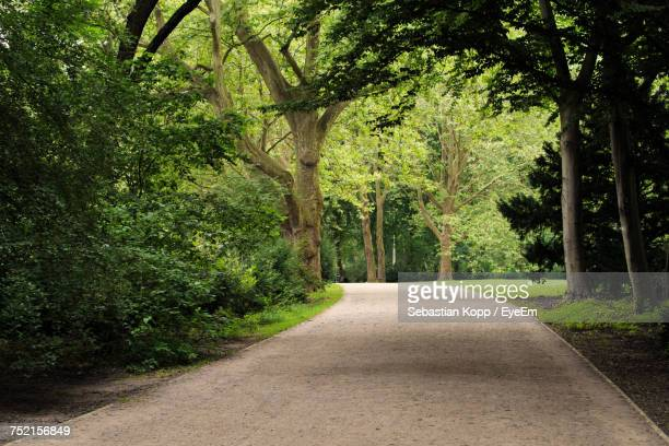 road amidst trees in forest - public park stock photos and pictures