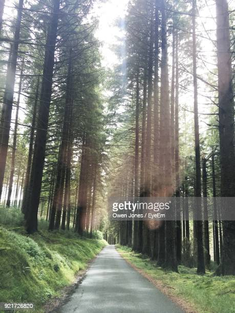 road amidst trees in forest - lake vyrnwy stock pictures, royalty-free photos & images