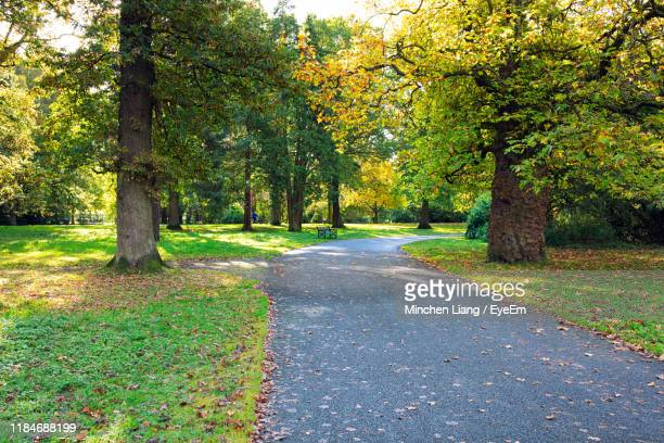 road amidst trees in park during autumn - belfast stock pictures, royalty-free photos & images