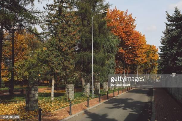road amidst trees in park during autumn - bortes stockfoto's en -beelden