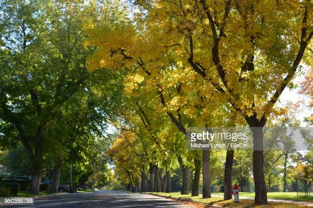 road amidst trees in park during autumn - billings montana stock pictures, royalty-free photos & images