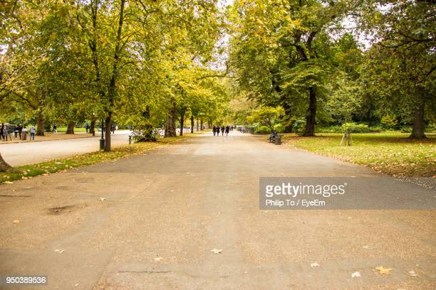 road amidst trees in park during autumn - hyde park london stock photos and pictures
