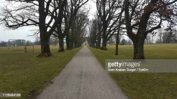 road amidst trees in park - kahler baum stock-fotos und bilder