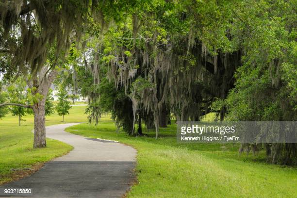 road amidst trees in park - tallahassee stock pictures, royalty-free photos & images