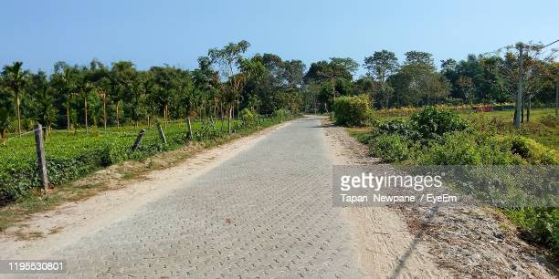 road amidst trees on field against sky - diminishing perspective stock pictures, royalty-free photos & images