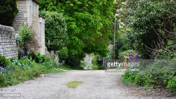 road amidst trees - buckinghamshire stock pictures, royalty-free photos & images